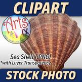 """Sea Shell"" Clipart Stock Photo of a Sea Shell"