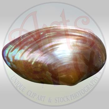 """! """"Sea Shell"""" Clipart Stock Photo of a Shiny Sea Shell"""