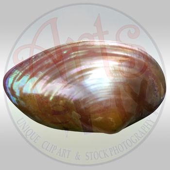 """""""Sea Shell"""" Clipart Stock Photo of a Shiny Sea Shell"""
