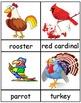 -Birds - Birds - Birds - Teach it! Test it! Vocabulary