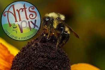 """Bumble Bee""  - Insect - Stock Photo - Macro CloseUP"
