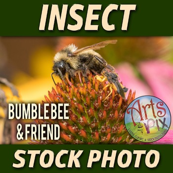 """Bumble Bee and friend"" - Insect - Stock Photo - Macro CloseUP - Bee"