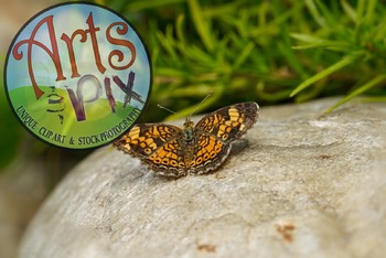 """""""Butterfly"""" - stock photo - title background - insects"""