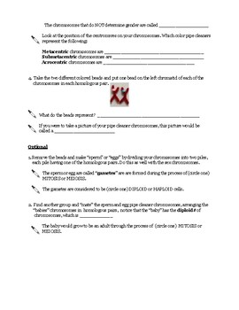 """""""Chromosomes in a Cup"""" Activity/Guided Lesson - ALL Chromosome terms and more!"""
