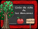 """""""Ciclo de vida de las manzanas"""""""