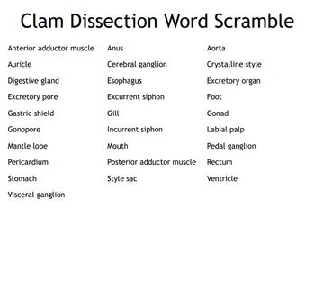 """Clam Dissection"" Vocabulary Bingo Game"