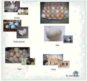 ¿De dónde viene el Conejo de Pascua?