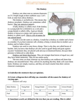 """Donkey"" Reading Worksheets: Q&A, Vocabulary, Timeline, Sequencing"