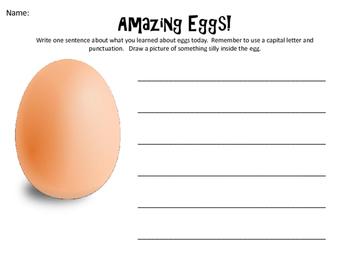 Egg Lab