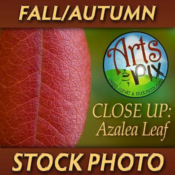 """""""FALL Azalea Leaf Close UP"""" - Photograph - Fall Leaf - Stock Photo"""