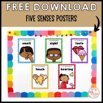 Five Senses Flash Cards Visual Reminders FREE DOWNLOAD
