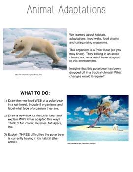 *FREEBIE* Animal Adaptation Polar Bear Assignment!