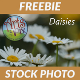 "!FREEBIE! ""Daisies"" Stock Photo - Flowers - Photograph"