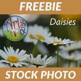 "!FREEBIE! ""Daisies"" Stock Photo - Flowers - Photograph"