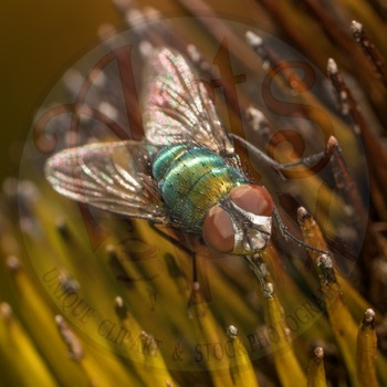 """Fly"" - Insect - Stock Photo - Macro CloseUP - Photograph"