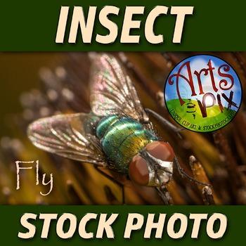 "! ""Fly"" - Insect - Stock Photo - Macro CloseUP - Photograph"