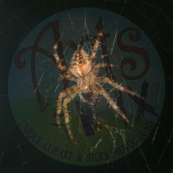 """""""Garden Orb Weaver SPIDER"""" - Stock Photo - Macro CloseUP - Photograph"""