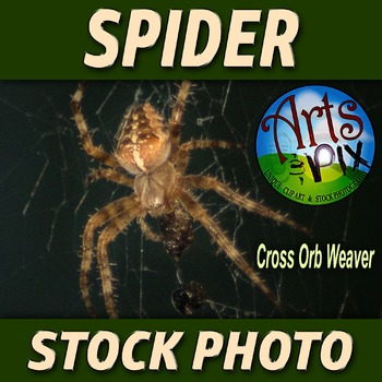"! ""Garden Orb Weaver SPIDER"" - Stock Photo - Macro CloseUP"