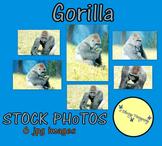 """Gorilla"" - Stock Photos - Photo Pack Bundle - animals"