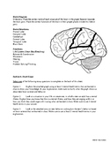 [Health] Health Science, Unit 2 --- Stress, Depression and Anxiety