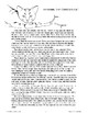 """Hercules"" and ""Herman, the Curious Cat"""