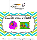"""La célula animal y vegetal"""