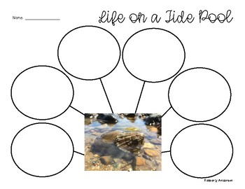 """Life in the Tide Pool"": Reading Response Graphic Organizer"