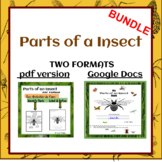 """""""Parts of an Insect"""" for Google Docs and PDF BUNDLE"""