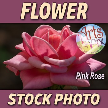 """! """"Pink ROSE"""" - Photograph - Flower - Stock Photo - Close UP"""