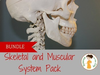 A bundle of lab and notes to teach skeletal and muscular systems