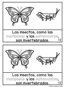 ¿Qué es un animal invertebrado? ~ What are Invertebrate Animals? Bilingual