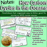 [Remote friendly] Notes The Carbon Cycle in the Marine Env