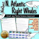 [Remote friendly] WebQuest North Atlantic Right Whales w/C