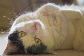 """""""Sassy Cat"""" - Animal - Stock Photo - CloseUP - Pets - Cat"""