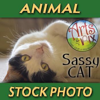 """! """"Sassy Cat"""" - Animal - Stock Photo - CloseUP - Pets - Cat"""