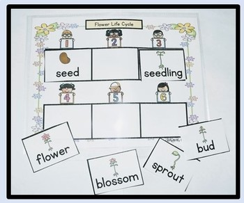 {Science} Learn About Plants Activity Centers