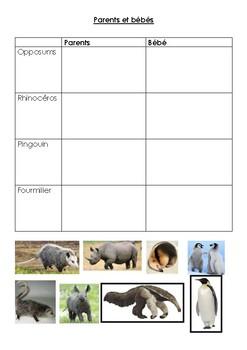 (Sciences) Parents et bébé animaux / Animal parents and offsprings