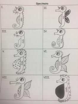 """Seahorse"" Specimens Dichotomous Key Activity"