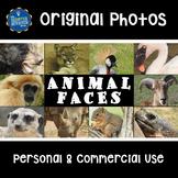 Stock Photos Animal Faces