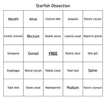 """""""Starfish Dissection"""" Vocabulary Bingo Game"""