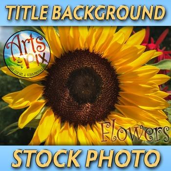 """Sunflower"" - Photograph - Sunflower Background - Stock Photo - Close UP"