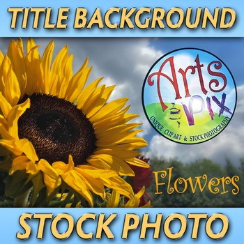 """""""Sunflower and Sky"""" - Photograph - Sunflower Background - Stock Photo"""