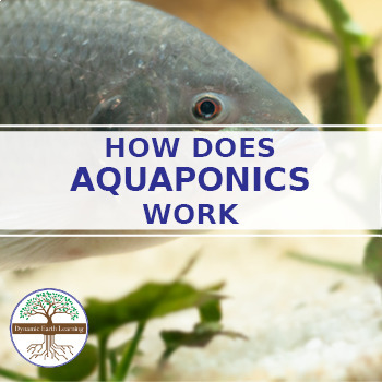 (Sustainability) Aquaponics: How does it work? - Info graphic Worksheet