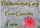 """The Rose that Grew From Concrete"" Black History Month; Tupac Shakur"