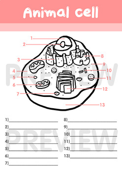 Made by Teachers: Animal Cell Fill In The Blank