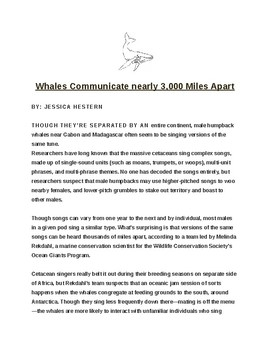 """Whales Communicate 3,000 Miles Apart"" Article of the Day"