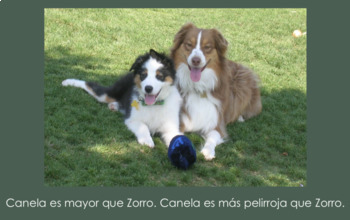 """""""Zorro y Canela"""" Present Series: Comparative Structures Slideshow and Practice W"""