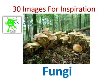 30 Images for Inspiration - Fungi