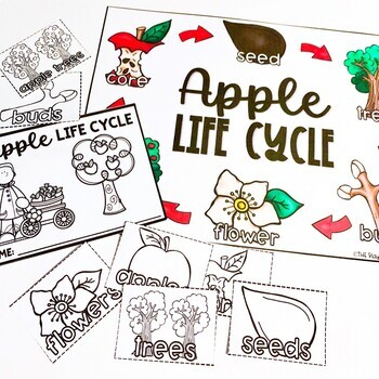 Apple Life Cycle Unit for Preschoolers