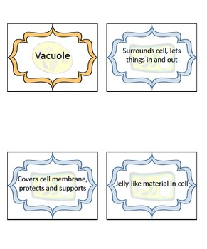 1-Day Cell Organelle Lesson